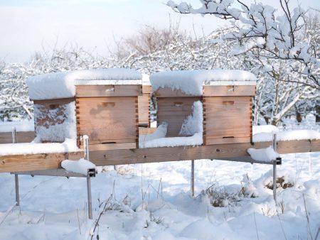 Bijenkasten behandel met Allback lijnolie.